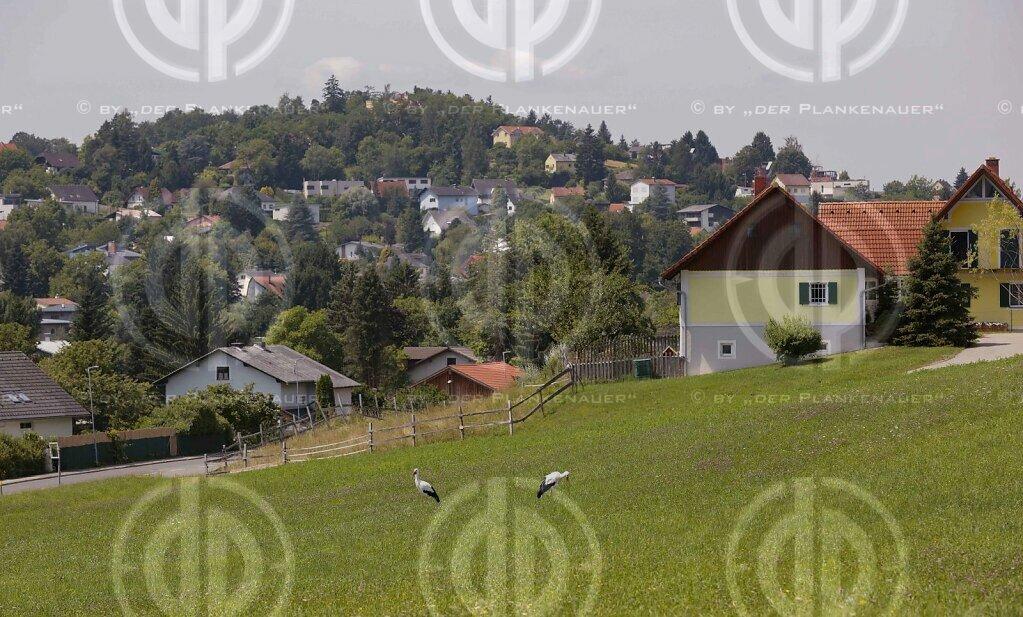 Natur in Stadtnähe - Störche in der Ragnitz