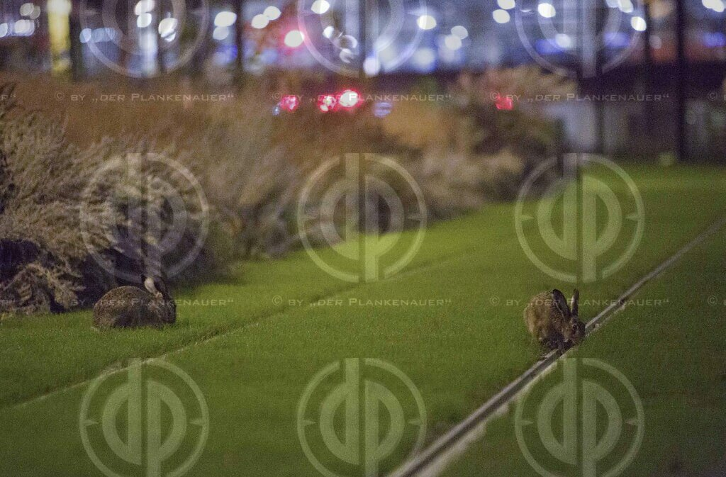 Wildtiere in Großstadt